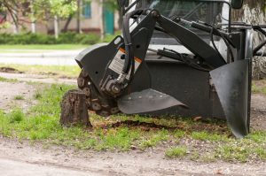 tree-stump-removal-adelaide