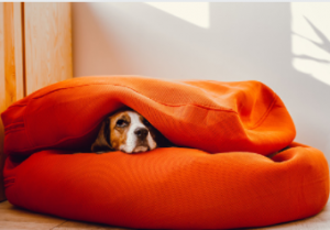 anxiety dog bed